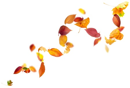 Colorful autumn leaves falling and spinning in the wind on white photo