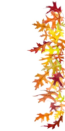 withering: Colorful autumn leaves border isolated on white