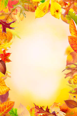 Multi colored autumn leaves frame on natural background photo