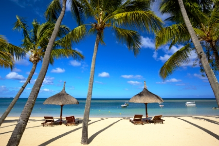 White sand beach and palm trees in Mauritius