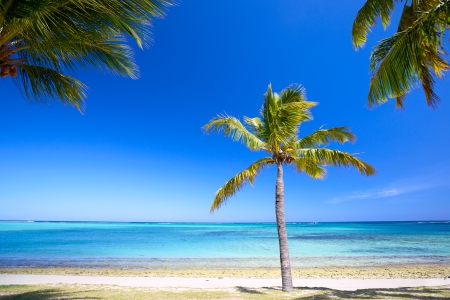 Paradise beach and palm tree  in Mauritius Island