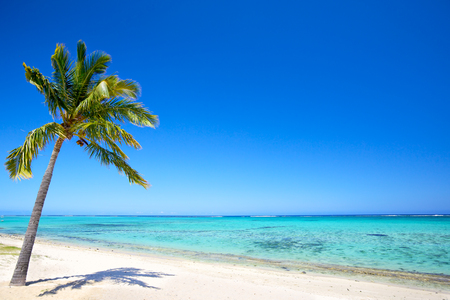 Paradise beach and palm tree  in tropical island photo