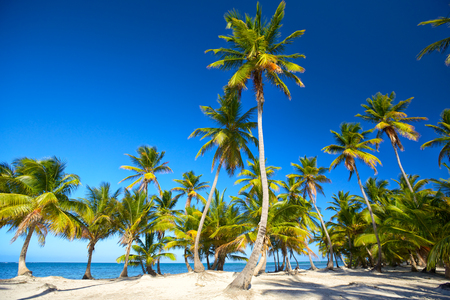 dominican republic: Tropical sand beach with palm trees in Dominican Republic