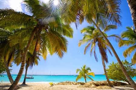 dominican republic: Tropical sand beach with palm trees, Dominican Republic