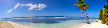 Panoramic view of tropical sand beach with palms Banque d'images