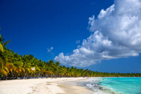 republic dominican: Tropical beach in Saona Island, Caribbean Sea, Dominican Republic Stock Photo