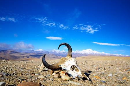 Tibetan landscape with yak bones and snow mountains photo