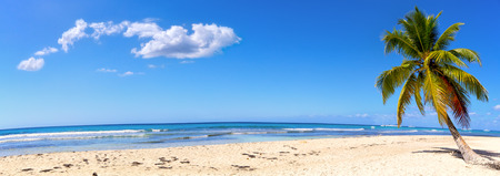 Panoramic view of white sand beach with palm, Dominican Republic