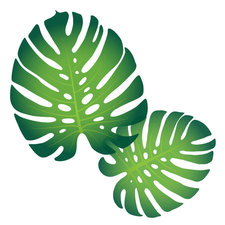 Pattern with tropical monstera leaves