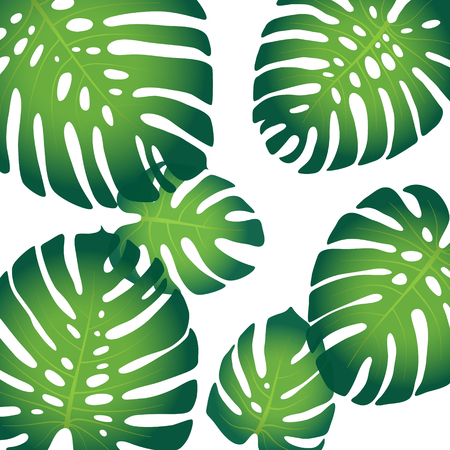 monstera leaf: Background pattern with tropical leaves of monstera Illustration