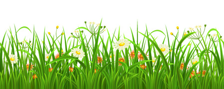 summer field: Seamless green grass with flowers, vector illustration