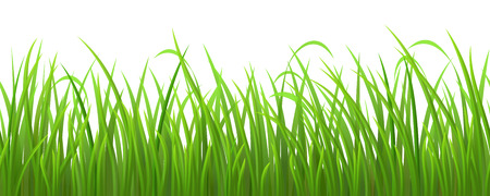 grass field: Seamless green grass on white background, vector illustration