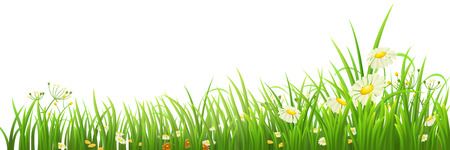 white daisy: Green grass and flowers on white, vector illustration Illustration