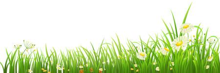 Groen gras en bloemen op wit, vector illustratie