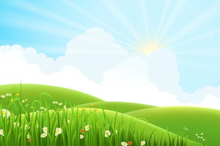 dia soleado: Prado del verano soleado paisaje, ilustración vectorial