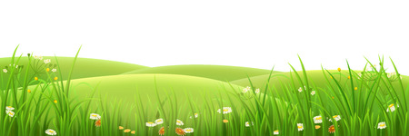 Meadow, green grass and flowers , vector illustration Çizim