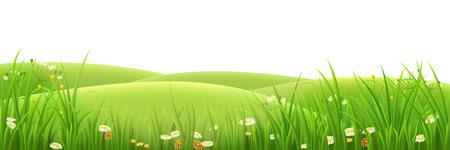 Weide, groen gras en bloemen, vector illustratie