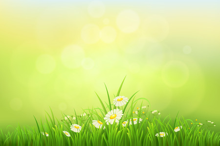 tuft: Spring nature background with green grass and daisies Illustration