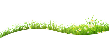 Summer banner with green grass and flowers, vector illustration
