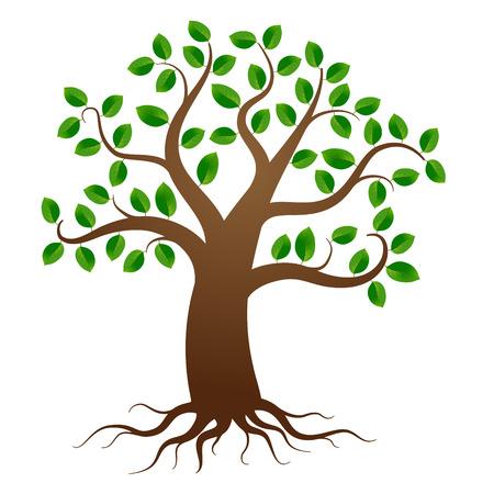 boom: Groene boom met wortels op een witte achtergrond Stock Illustratie