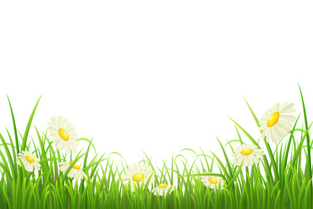 Green grass with daisies on white, vector illustration Stock Illustratie