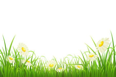 L'herbe verte avec des marguerites sur fond blanc, illustration vectorielle Vecteurs