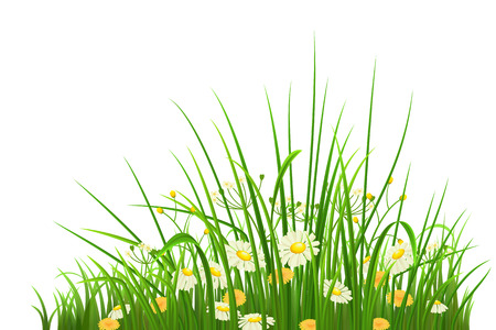 Spring green grass, herbs and flowers on white background