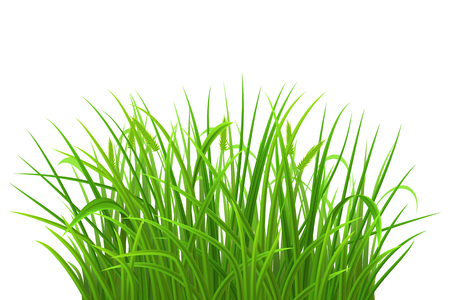 Spring green grass on white background, vector illustration