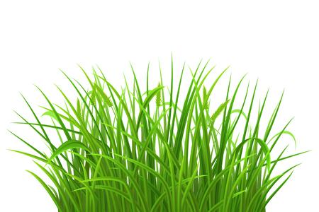 Spring green grass on white background, vector illustration