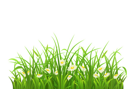 tuft: Spring green grass and daisies on white background Illustration
