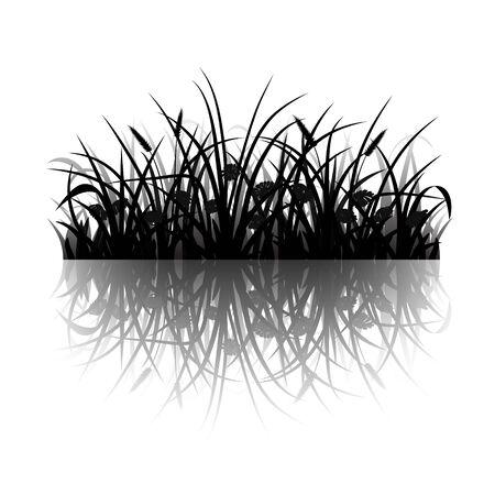 meadow  grass: Silueta hierba del prado con la reflexi�n, ilustraci�n vectorial