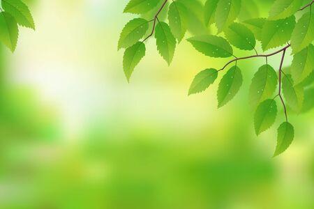 haya: Hojas verdes frescas de fondo, ilustraci�n vectorial Vectores