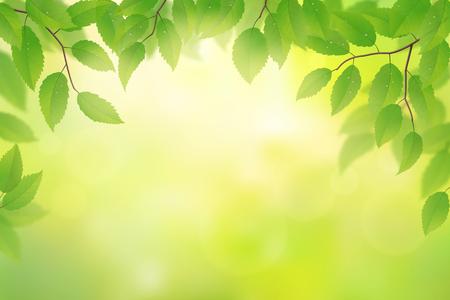 beech: Green beech leaves background, vector illustration