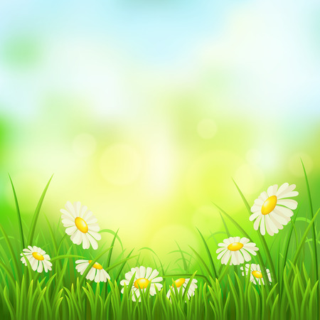 Spring meadow with green grass and daisies, vector illustration