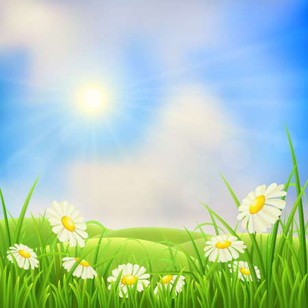 grass flowers: Meadow landscape with green grass, flowers, hills and sun