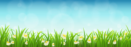 panoramic sky: Fresh green grass, daisies and blue sky, vector illustration