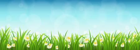 Vers groen gras, madeliefjes en blauwe hemel, vector illustratie Stock Illustratie