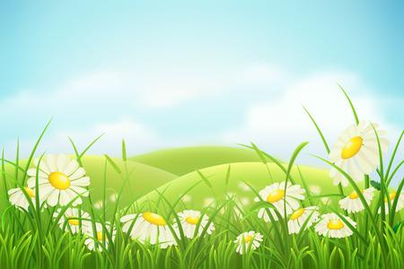 marguerite: Printemps prairie avec l'herbe verte, des collines et des marguerites Illustration