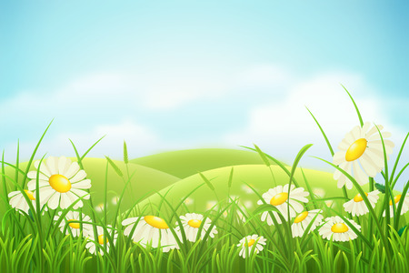 blue daisy: Spring meadow with green grass, hills and daisies