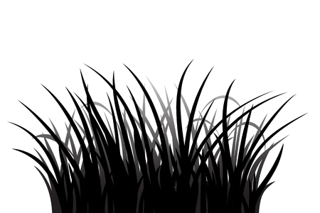 grass silhouette: Grass silhouette on white background, vector illustration