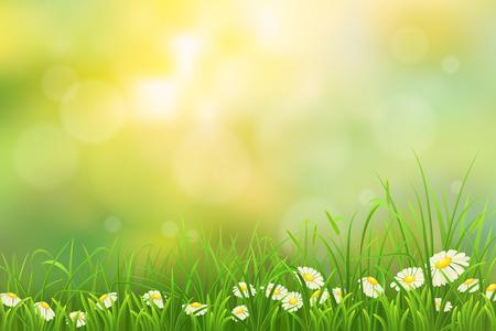 Jarní příroda pozadí s zelené trávy a chamomiles