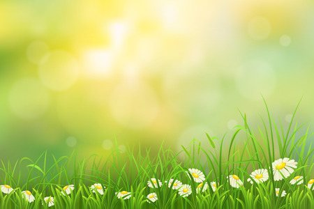Spring nature background with green grass and chamomiles Çizim