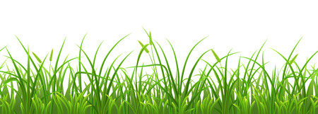 grass illustration: Seamless fresh green grass on white background