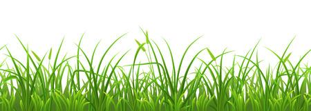Seamless fresh green grass on white background