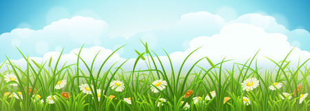 Summer meadow landscape with green grass, flowers and blue sky