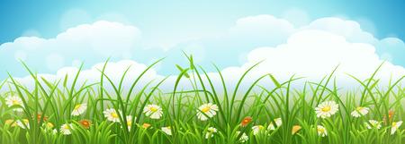 Zomer weide landschap met groene gras, bloemen en blauwe hemel