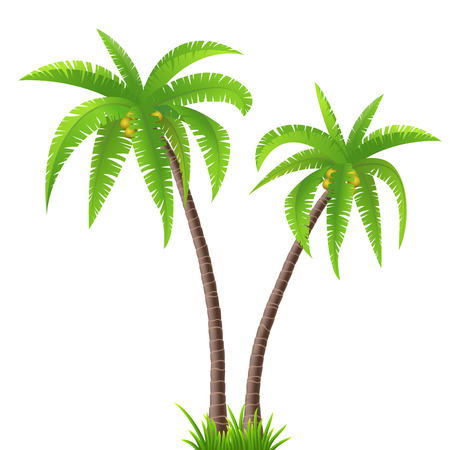 Two coconut palm trees on white background