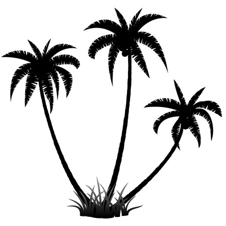 coconut trees: Palm trees silhouette on white background, vector illustration Illustration