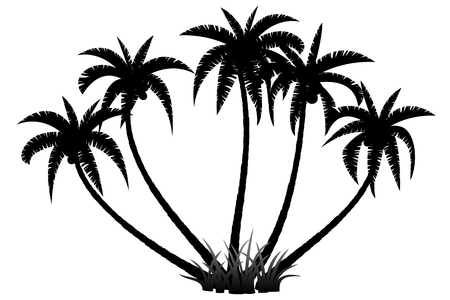 coco: Palm trees silhouette on white background, vector illustration Illustration