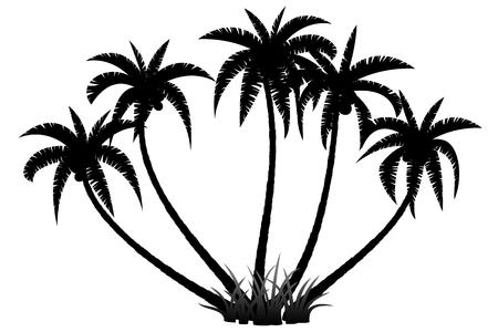 palm trees silhouette: Palm trees silhouette on white background, vector illustration Illustration
